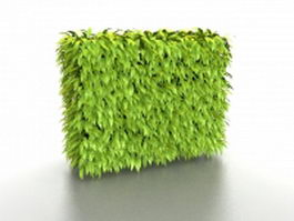 Privacy hedge wall plant 3d preview
