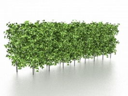 Evergreen hedge plants 3d model preview