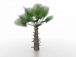 Windmill palm tree 3d model preview