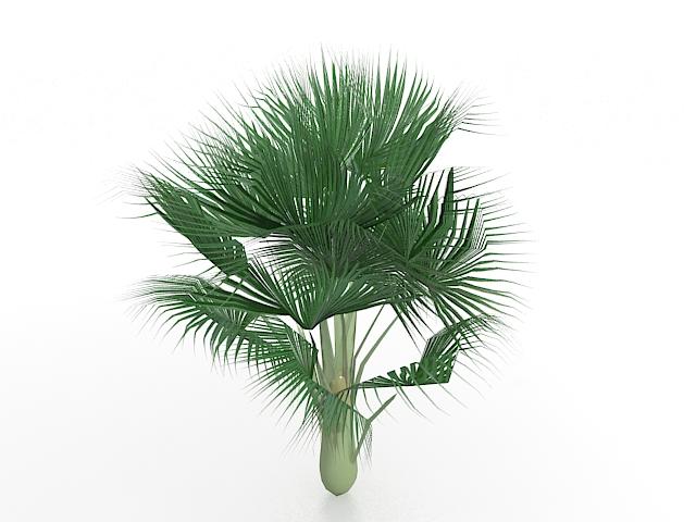 Bismarck palm tree 3d rendering