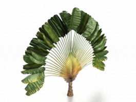 Fan palm tree 3d preview