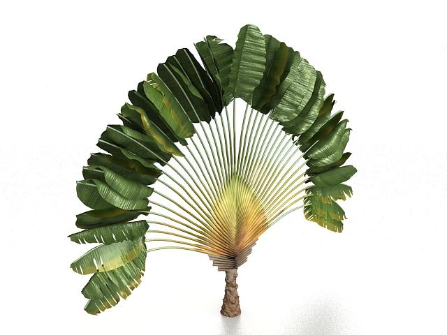 Fan palm tree 3d rendering