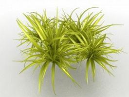 Ornamental grass plant 3d preview
