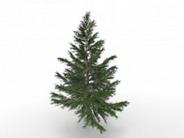 Norway Spruce tree 3d model preview