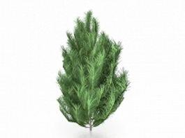 White bark pine tree 3d model preview