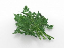 Parsley herb 3d model preview