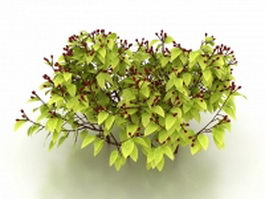 Shrub with red berries 3d preview