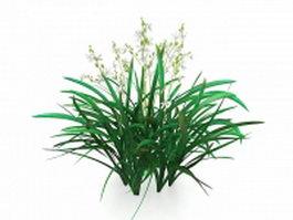 Cymbidium plants 3d model preview