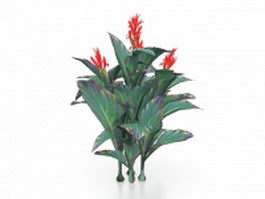 Red canna lily plants 3d model preview