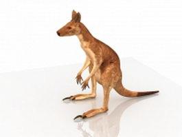 Australia red kangaroo 3d model preview