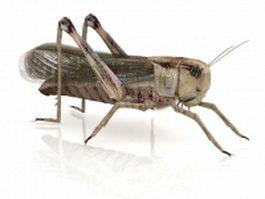 American grasshopper 3d preview