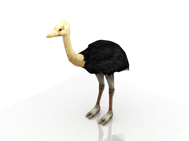 Adult male ostrich 3d rendering