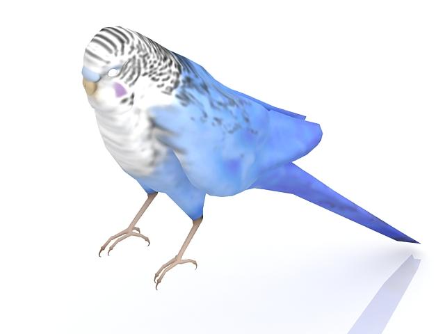 Parakeet bird 3d rendering