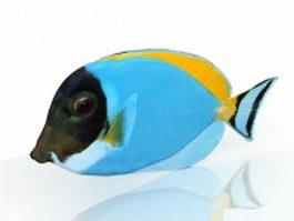 Blue tropical fish 3d preview