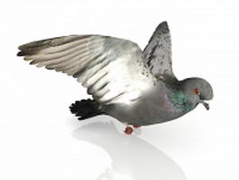 Dove bird flying 3d preview