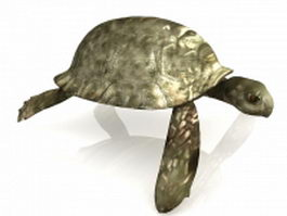 Wood turtle 3d model preview