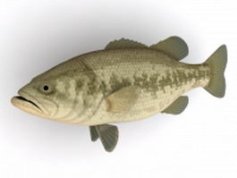 Black bass fish 3d model preview