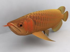 Asian arowana fish 3d model preview
