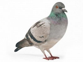 Pigeon bird 3d preview