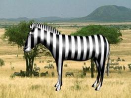 Grassland zebra 3d model preview