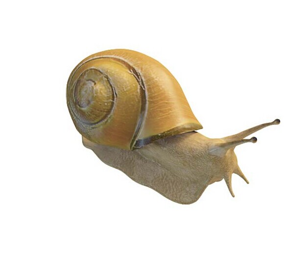 Yellow snail 3d rendering