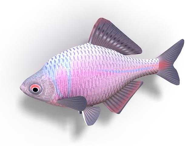 Crucian carp fish 3d rendering