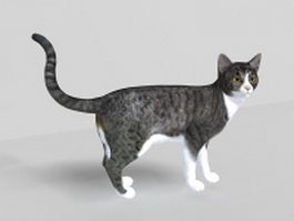 Grey tabby cat 3d preview