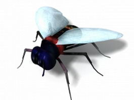 House fly 3d preview
