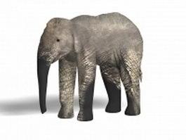 Asian elephant 3d model preview
