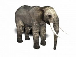 African elephant 3d preview