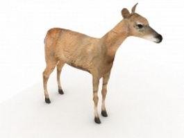 Fallow deer 3d model preview
