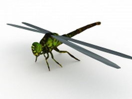 Black and green dragonfly 3d preview