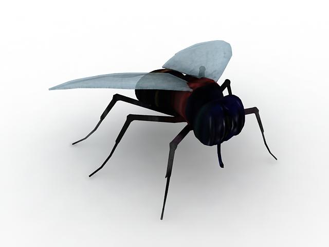 Black fly 3d rendering