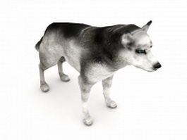 Husky dog 3d model preview