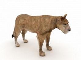 Asiatic lion 3d model preview