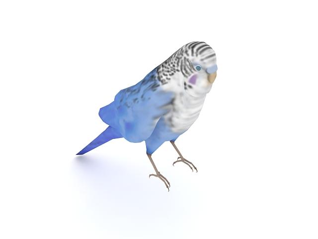 Blue parakeet bird 3d rendering