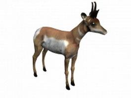 Pronghorn animal 3d model preview