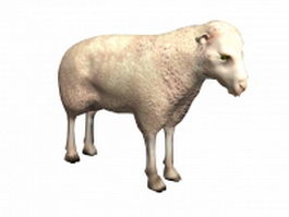 White sheep 3d preview