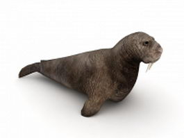 Pacific walruses 3d model preview