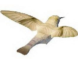 Anna hummingbird 3d model preview