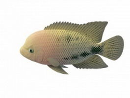 Redhead cichlid fish 3d model preview