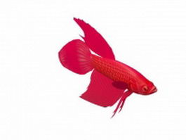 Red betta fish 3d model preview
