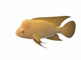 Red devil aquarium fish 3d model preview