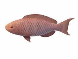 Red drum fish 3d model preview