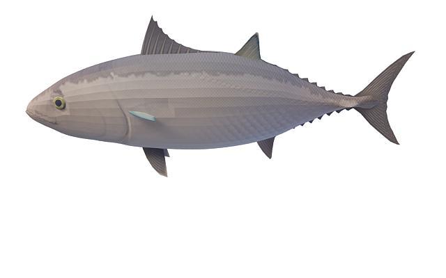 Blackfin tuna 3d rendering
