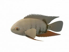Severum fish 3d preview