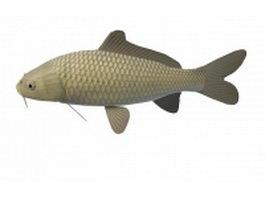 Freshwater carp fish 3d model preview