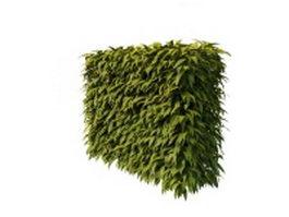 Hedge plants 3d model preview