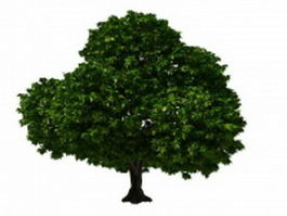 Topiary tree 3d model preview