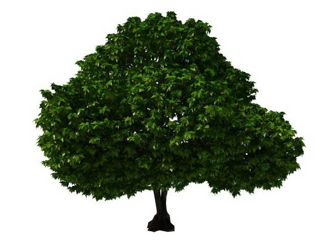 Topiary tree 3d rendering